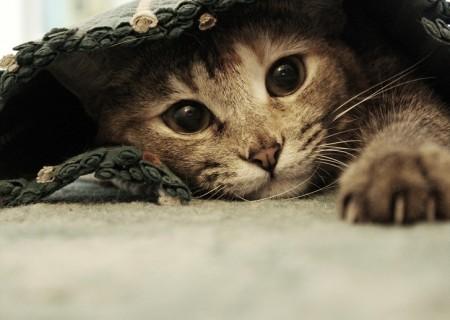 Как да разпознавате поведението на котката?