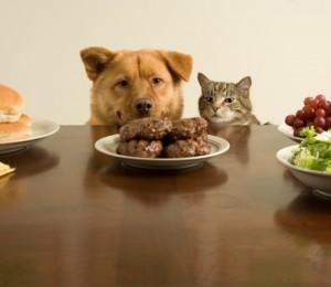 Опасни храни за домашните любимци