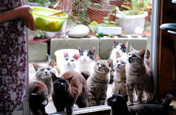 Tashirojima-cat-feeding-time-900x591_1