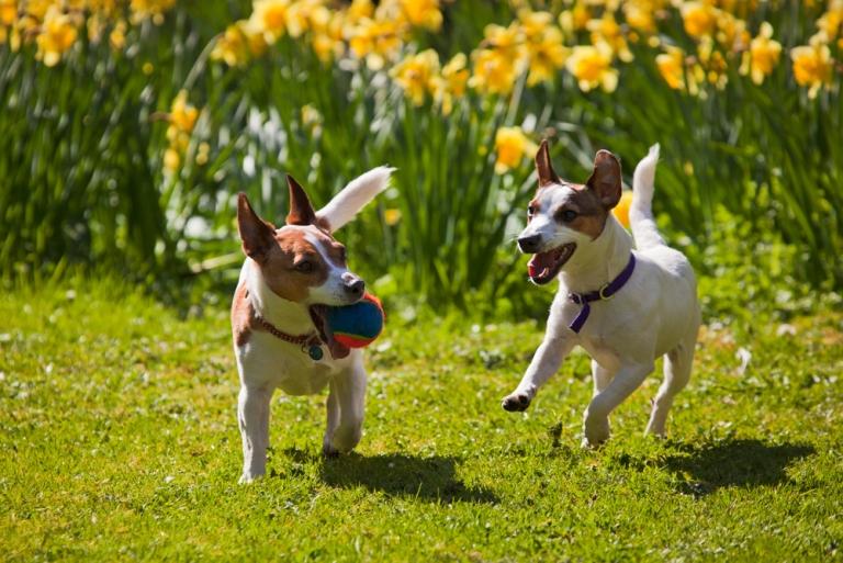 7 съвета за отглеждане на хиперактивни кучета