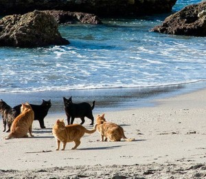 Ташироджима – Островът на котките