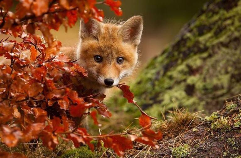 Животните и есента - магия в снимки