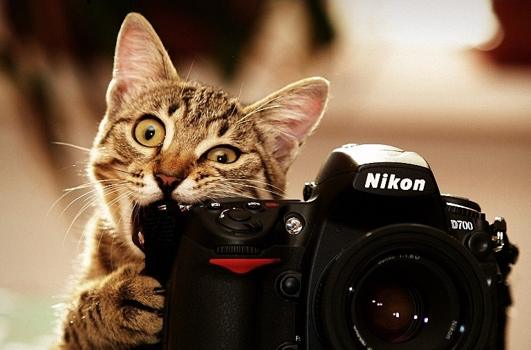 cat-biting-a-nikon-camera-animal-hd-wallpaper-1920x1080-2367_1